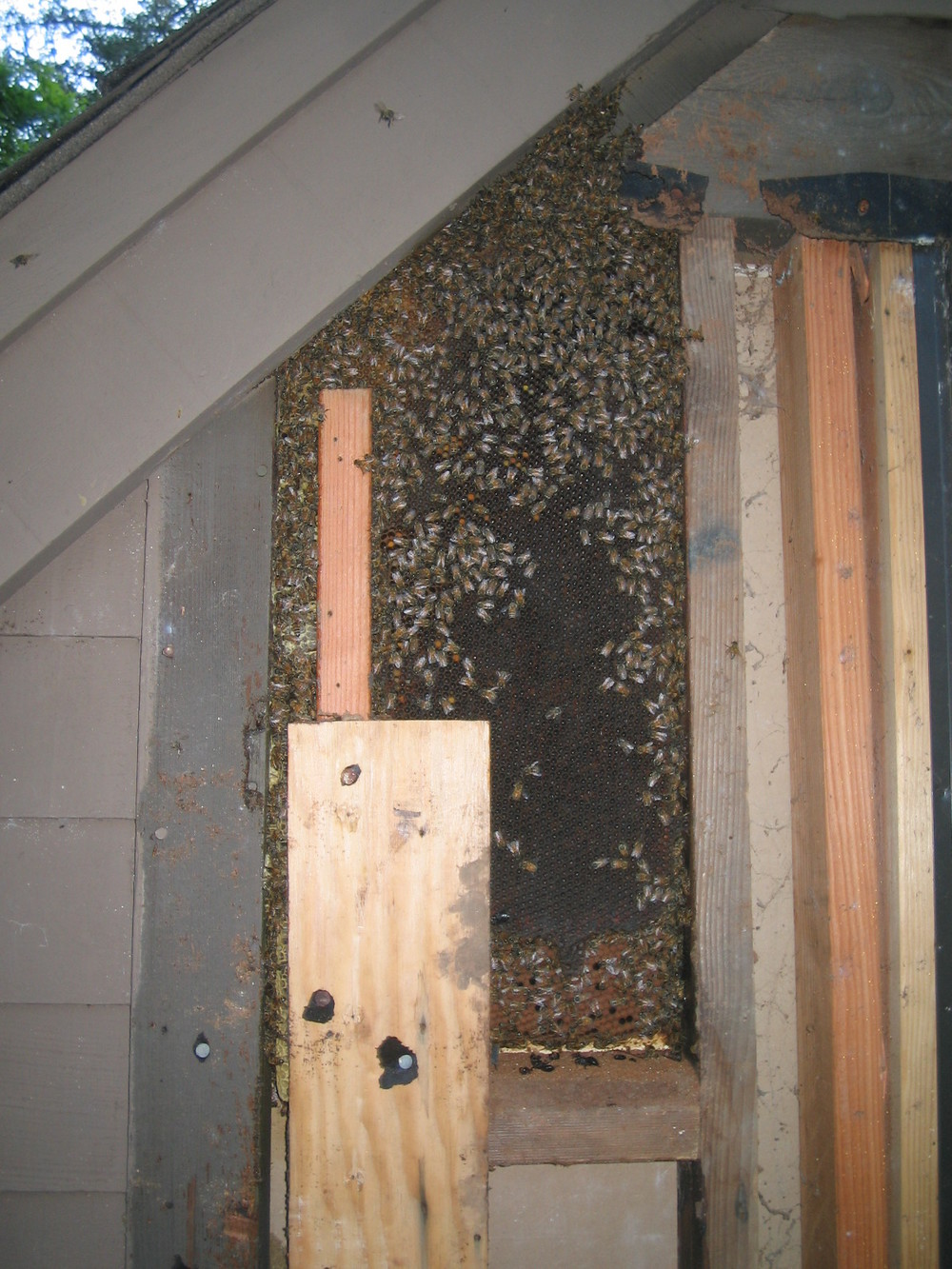 Hive in Forestville