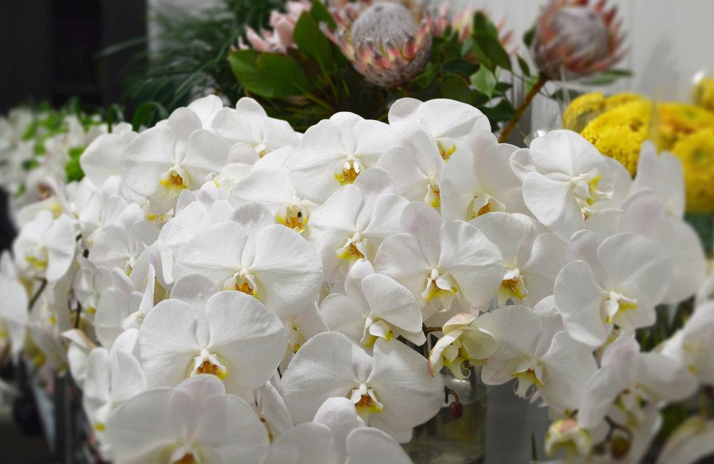 KALLA orchids