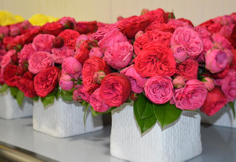KALLA Flowers 2 Pink