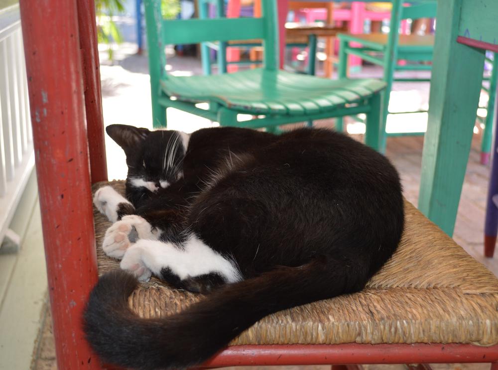 Black Cat Florida Keys