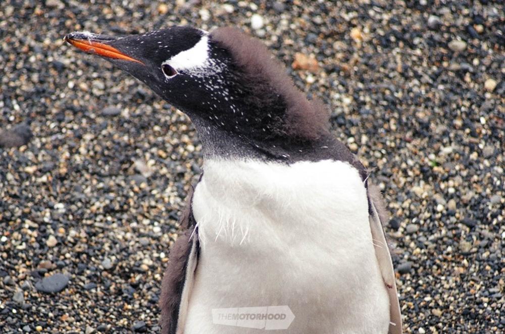 penguin final.jpg