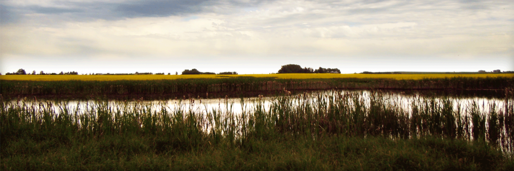 Ecosystem Services Pilot on Wetlands   Government of Alberta