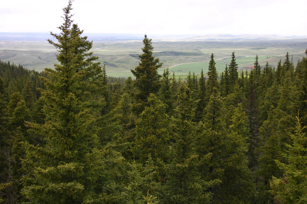 Cypress Hills Interprovincial Park Management Plan   Government of Alberta