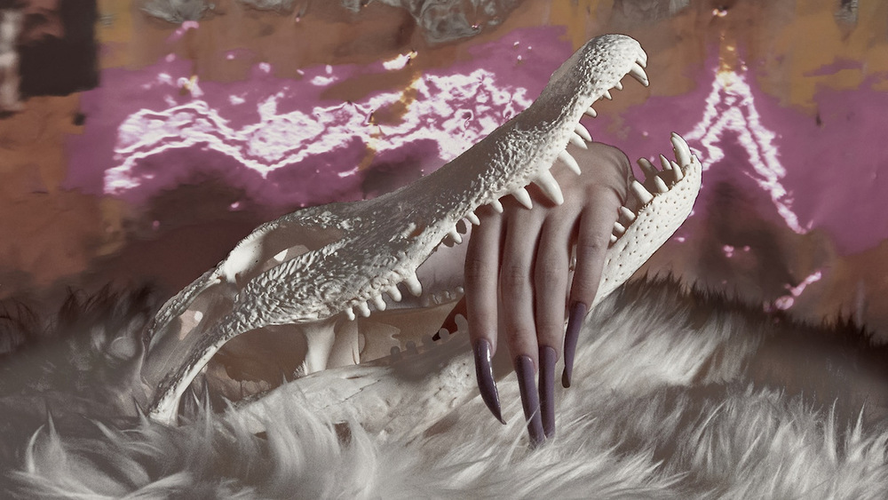 ALLIGATOR SKULL   VIA     ORACLE  , PH. LAUREN THURMAN-KING, 2014