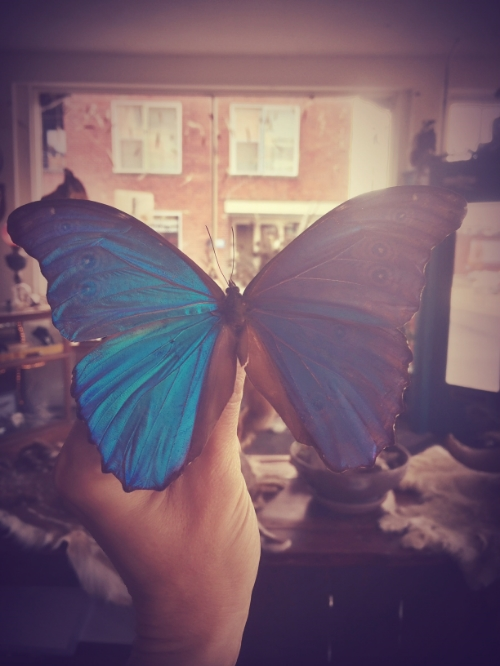 Are you kidding me, Blue Morpho?