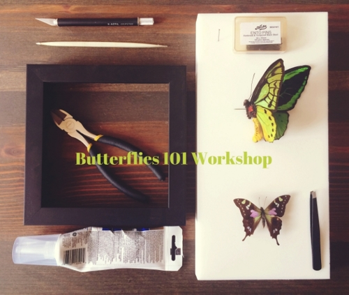 Butterflies101Workshop.OracleKC