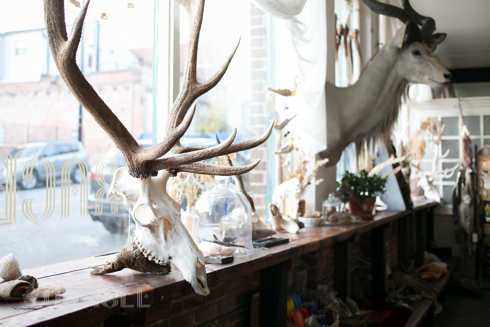OracleTaxidermyKC.ElkShelf.jpg