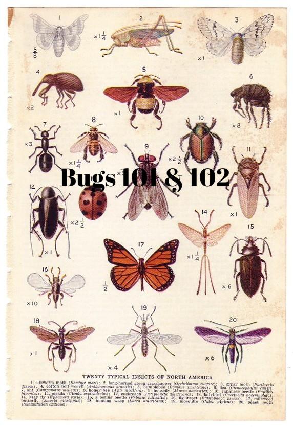 OracleKC.Bugs101&102.jpg