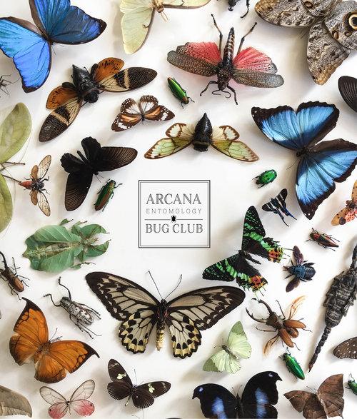 OracleKC.BugClub.jpg