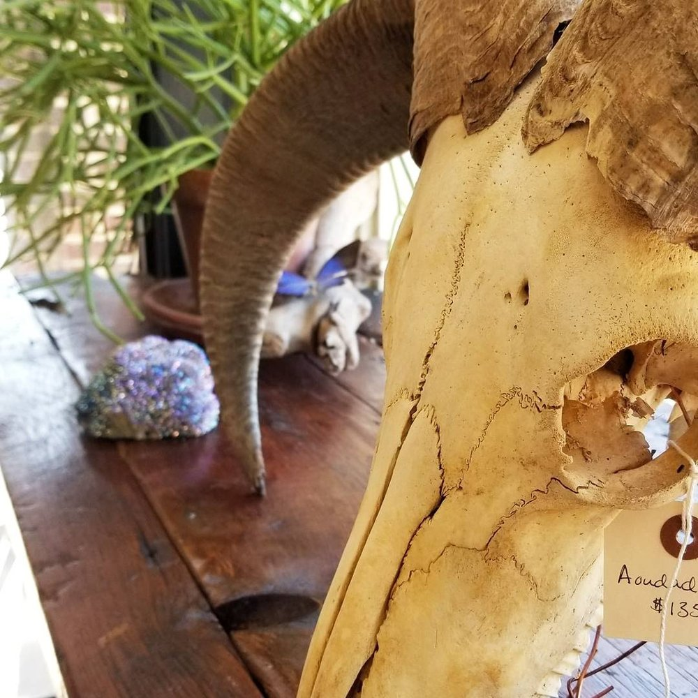 New crystals, skulls, and art work for sale! Not to mention small taxidermy!