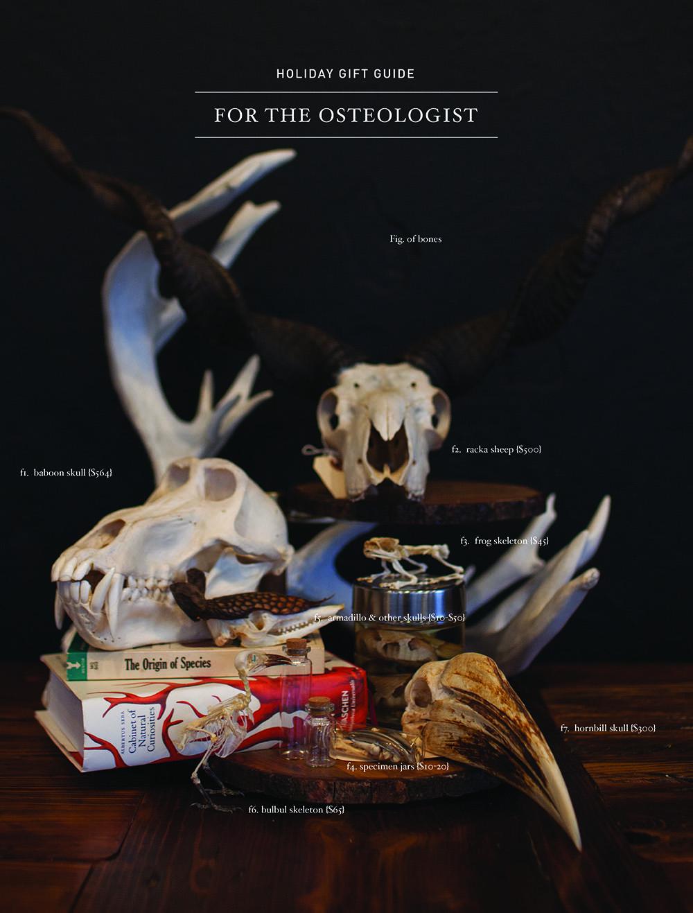 osteologist.jpg