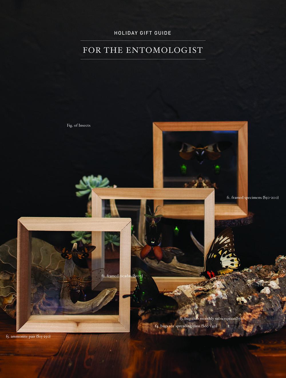 entomologist.jpg