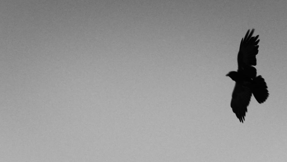 vlcsnap-2018-09-20-10h23m45s329.png