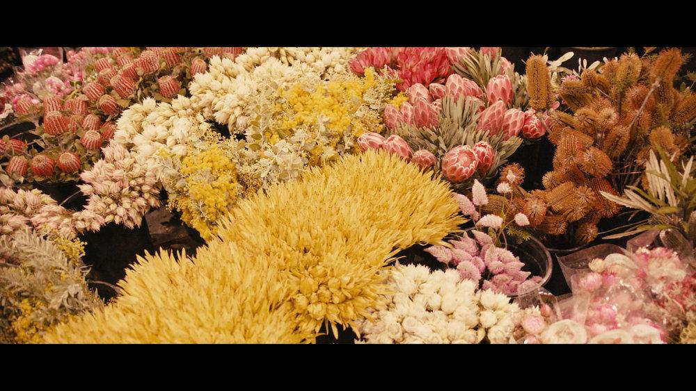 Grandiflora Film Stills 04.jpg