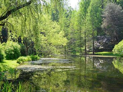 Jenkins Arboretum & Gardens