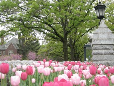 Haverford College Arboretum