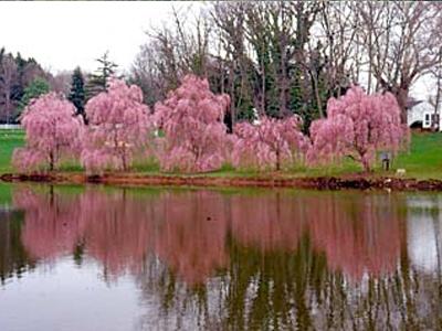 Henry Schmieder Arboretum
