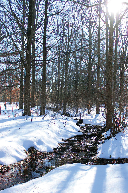 Copy of Tyler Arboretum
