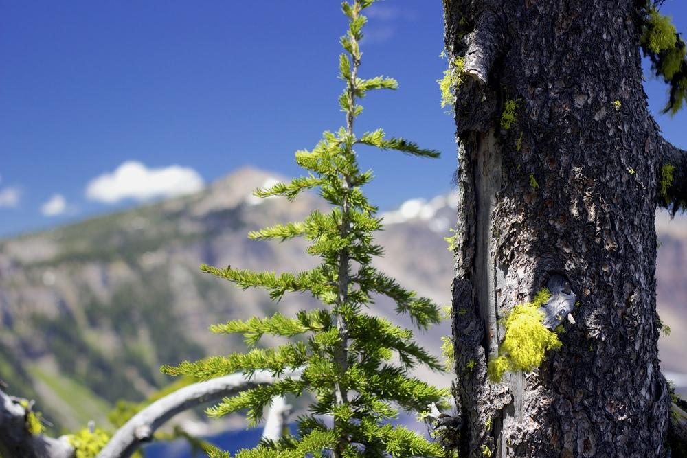 """Crater Lake #2"""
