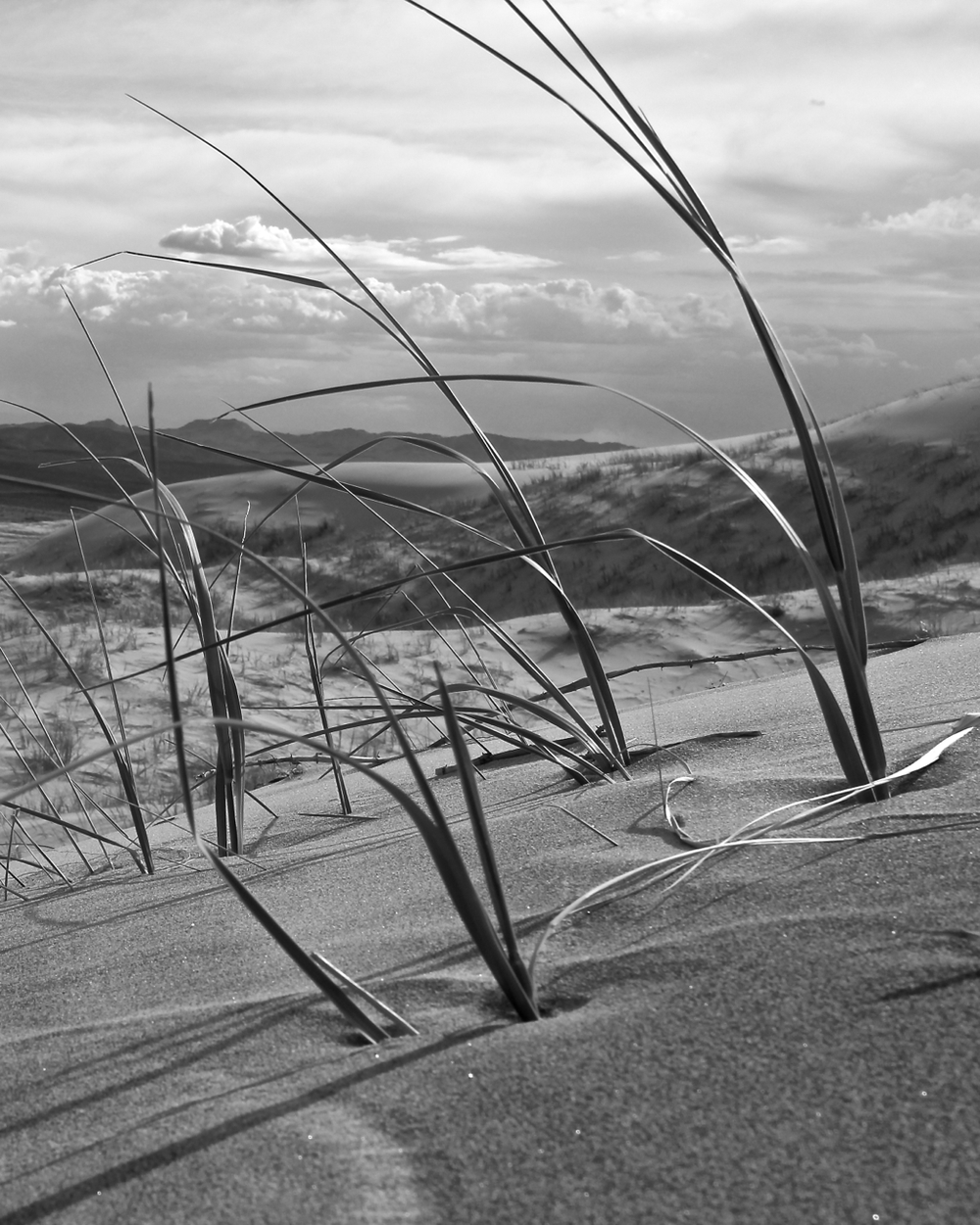 """""""Kelso Dunes"""""""