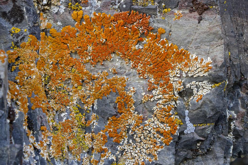 """""""Orange Lichen"""""""