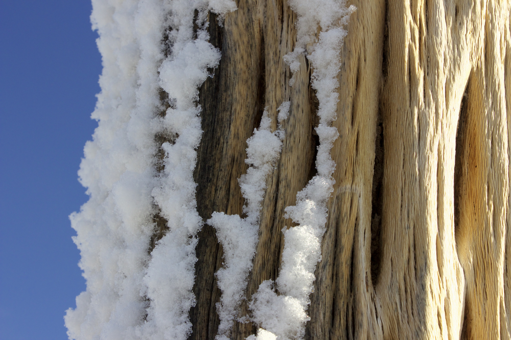 """Snowy Side of a Dead Saguaro"""