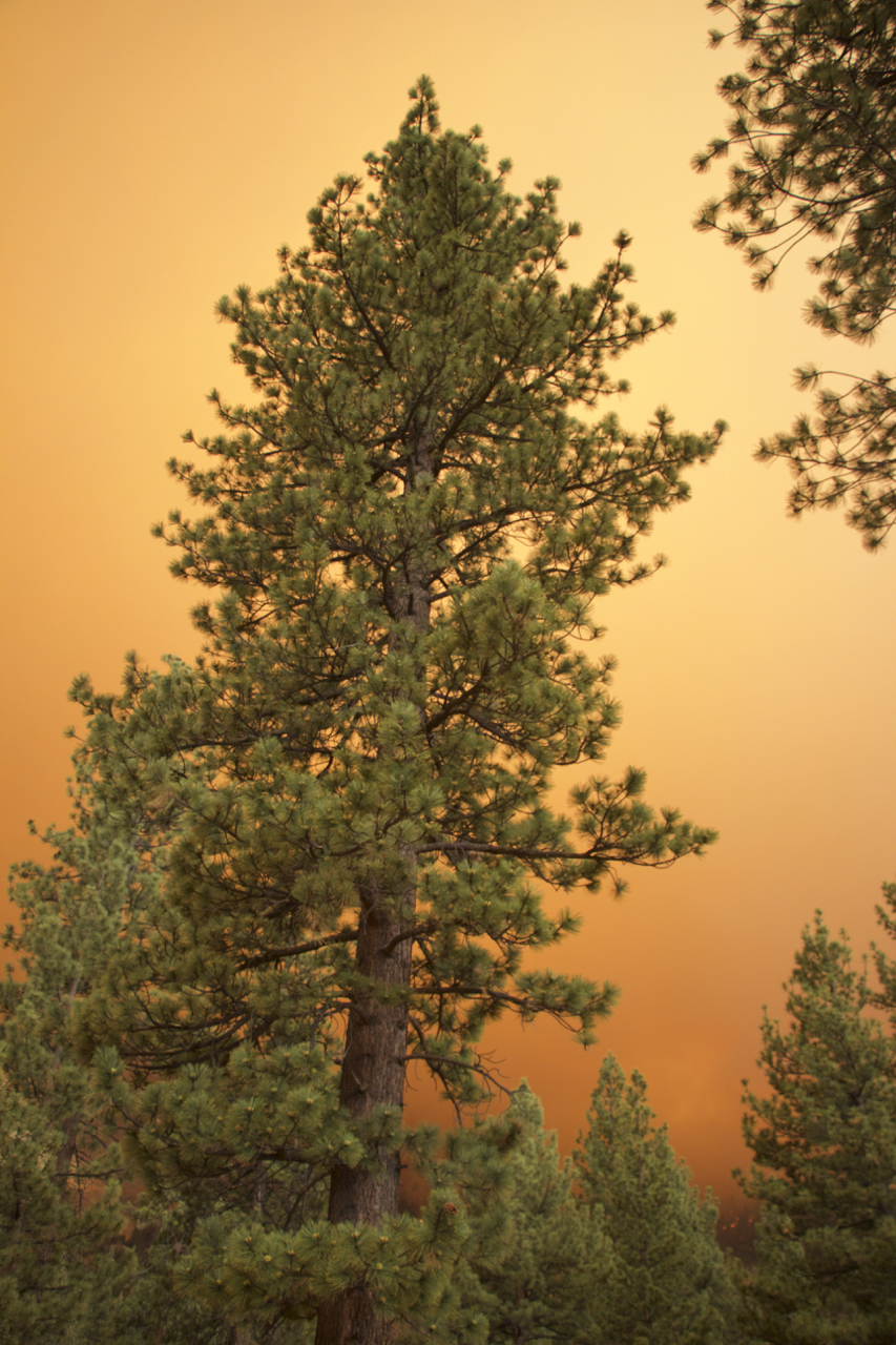 """Lake Fire: Portrait of an Orange Sky"""