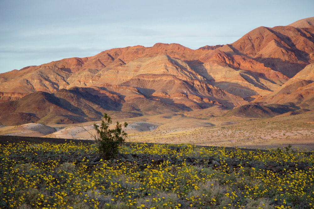 """Ibex Dunes Wildflower Sunset"""