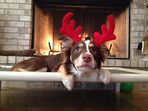Cash showing his holiday spirit.