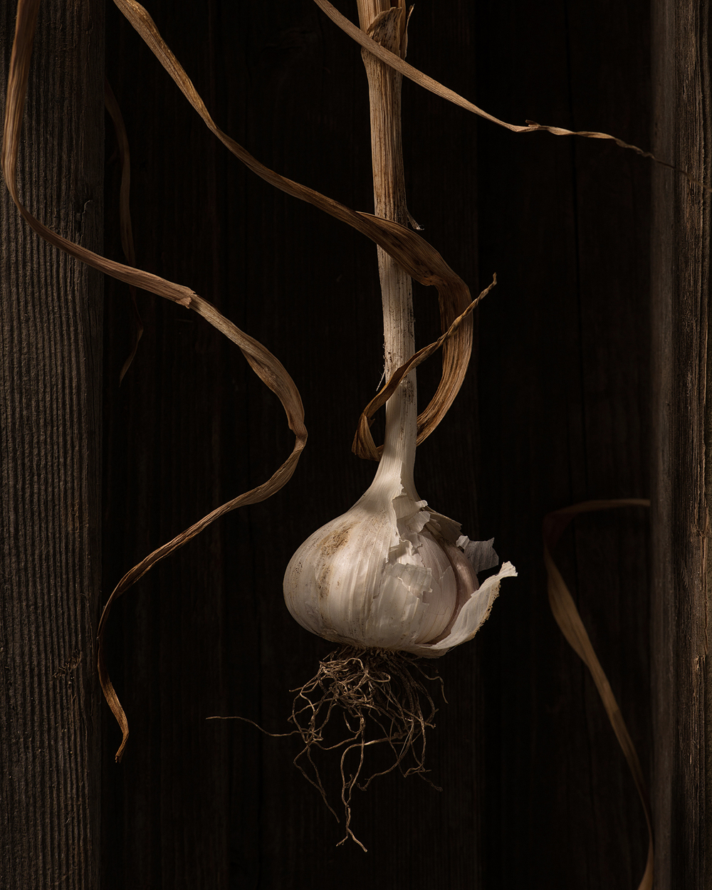 Garden Garlic
