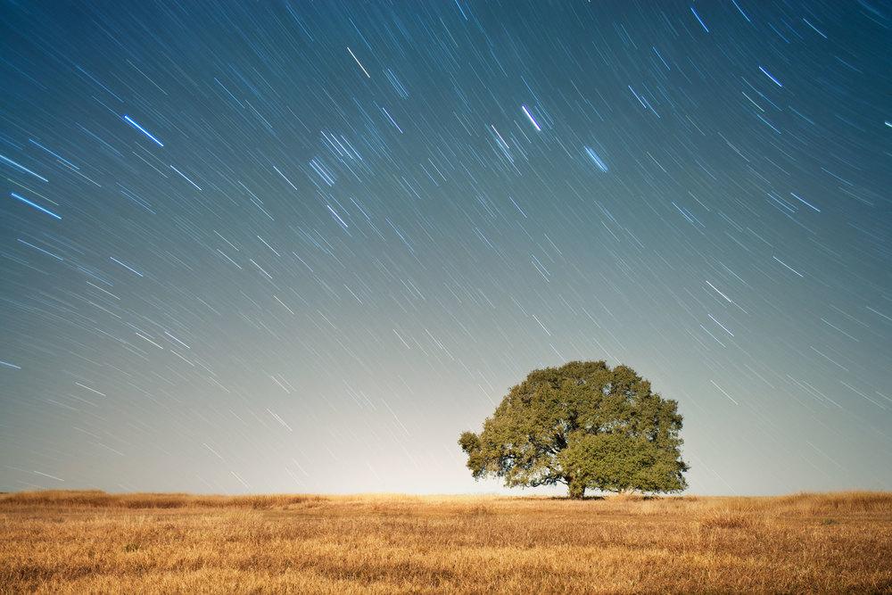 TX_TREE-STAR-TRAILS.jpg