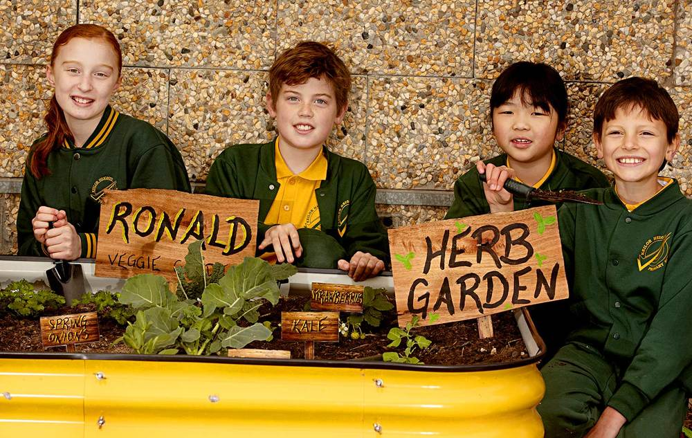 Students at Keilor Heights Primary School have a series of colourful veggie and herb patches which they have created and regularly maintain.
