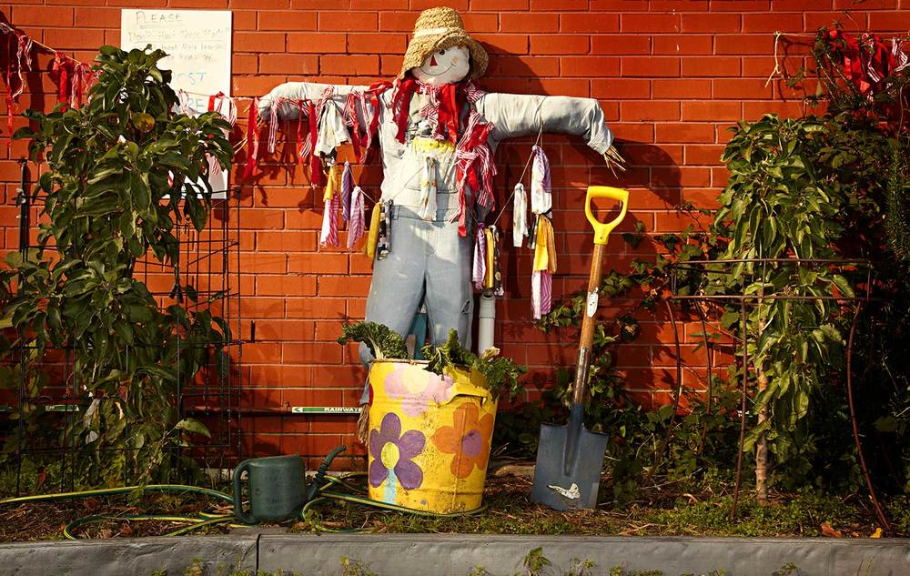 One of the best scarecrows around, at Moonee Ponds West Primary School.