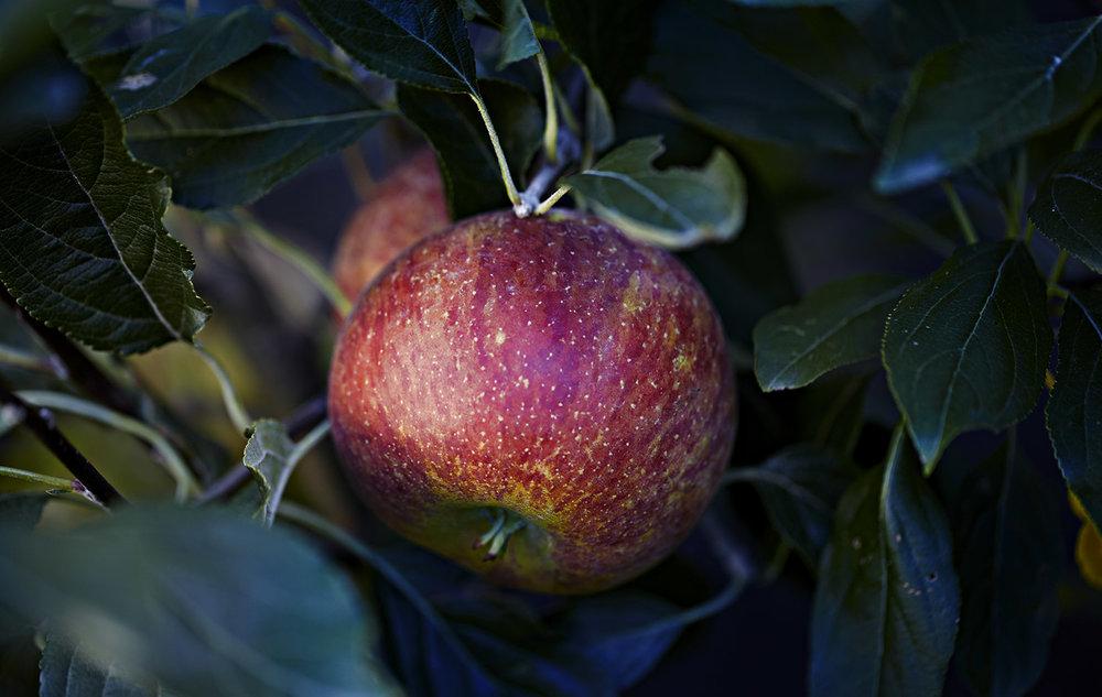 64-Apples-Kylie-Grinham-Fenchurch-Studios-Melbourne-Photographer.jpg