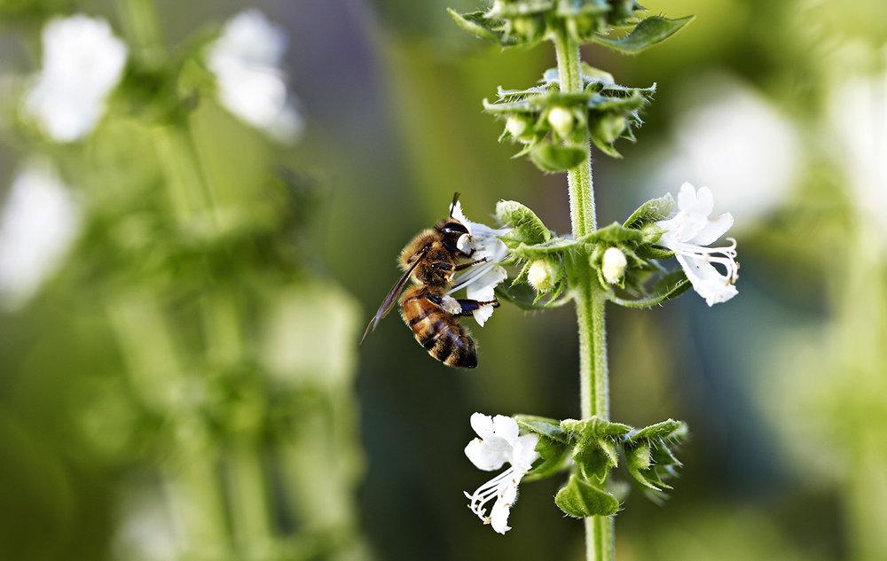 Bees-Kylie-Grinham-Fenchurch-Studios-Melbourne-Photographer.jpg