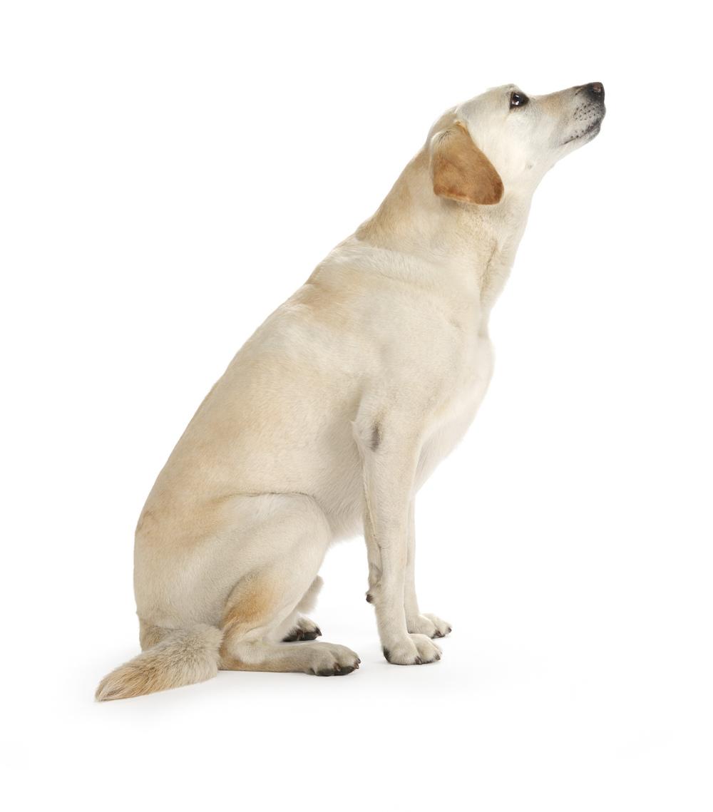 Planet Dog