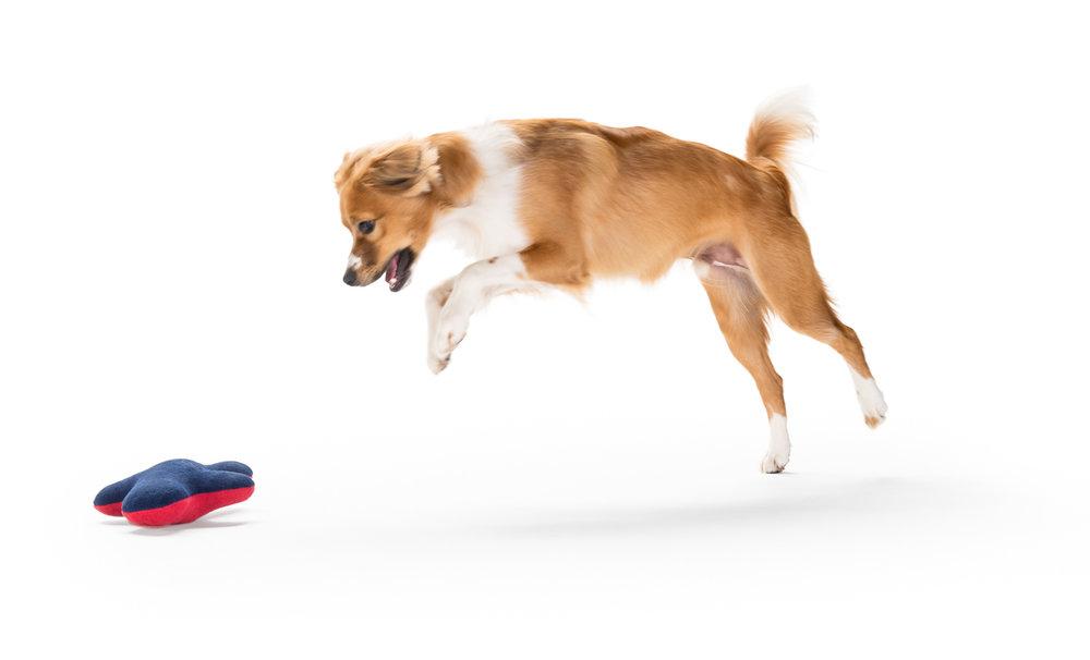 Dogs_2016-06-15--440.jpg