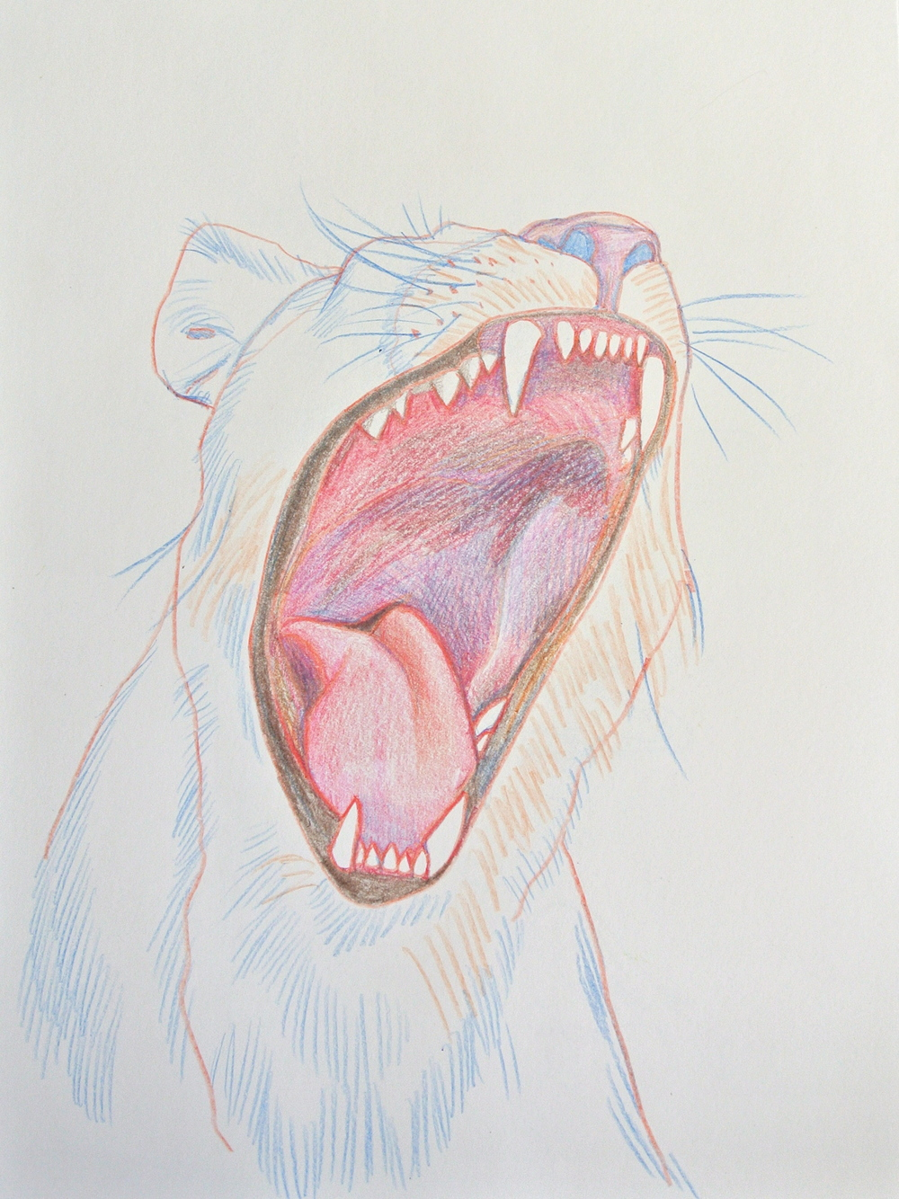 "LIONESS    pencil on paper, 10 x 14"", 2013"