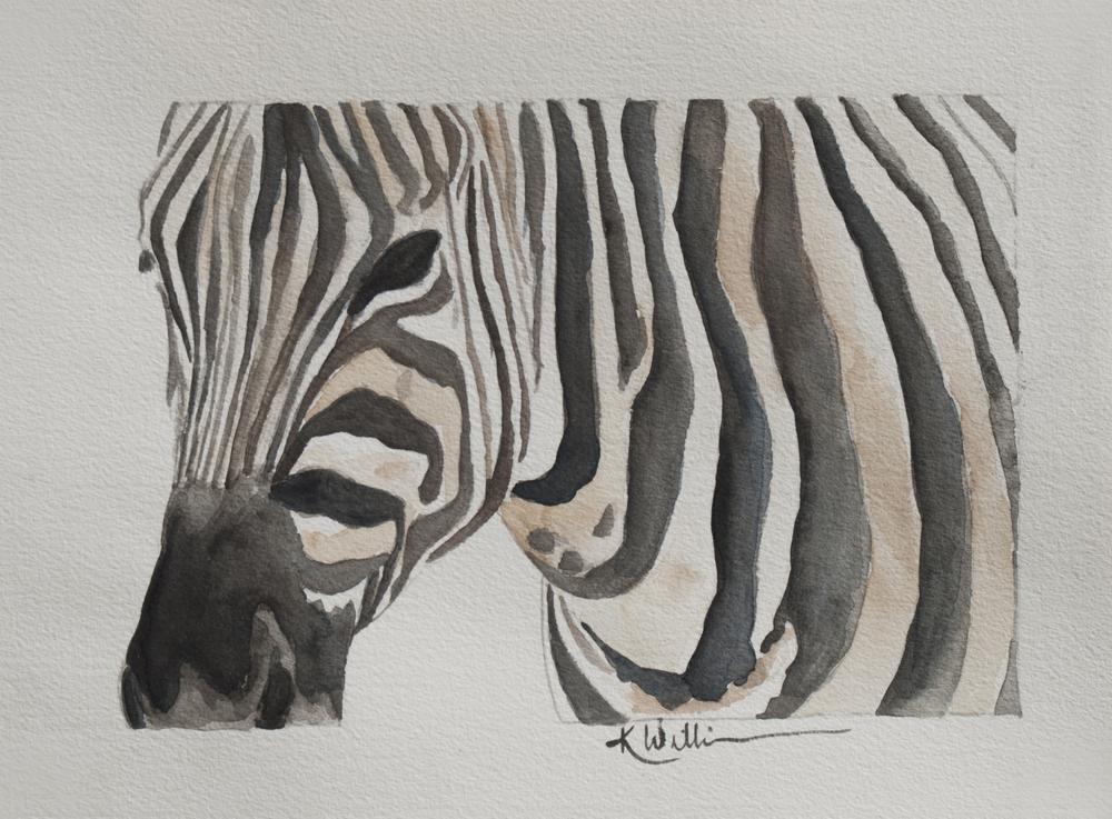 Zebra 2014