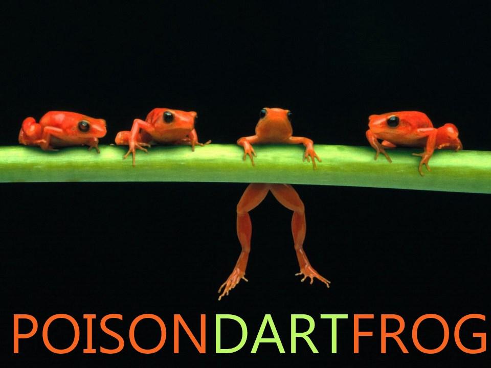 Poisondartfrog.jpg