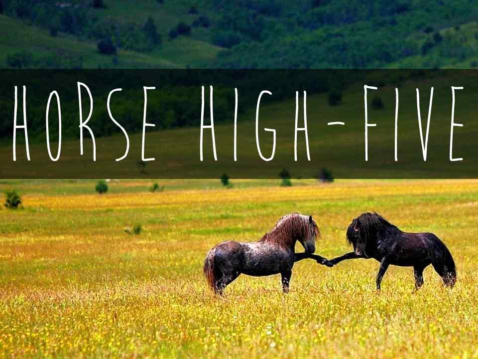 HorseHighFive