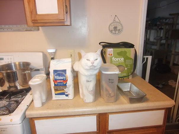 ninja-cat-hiding-funny-34__605.jpg