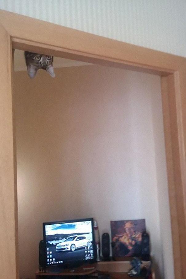 ninja-cat-hiding-funny-104__605.jpg