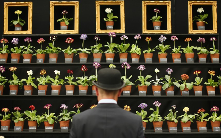 Detail Collective | Chelsea Flower Show 2014 | Auricula Display Great Pavilion | Photo: Dan Kitwood /