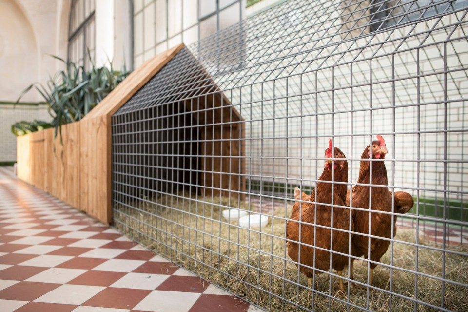 Detail Collective | Outside Spaces | Daily Needs Chicken Coop |  Image:u0026nbsp; Studio