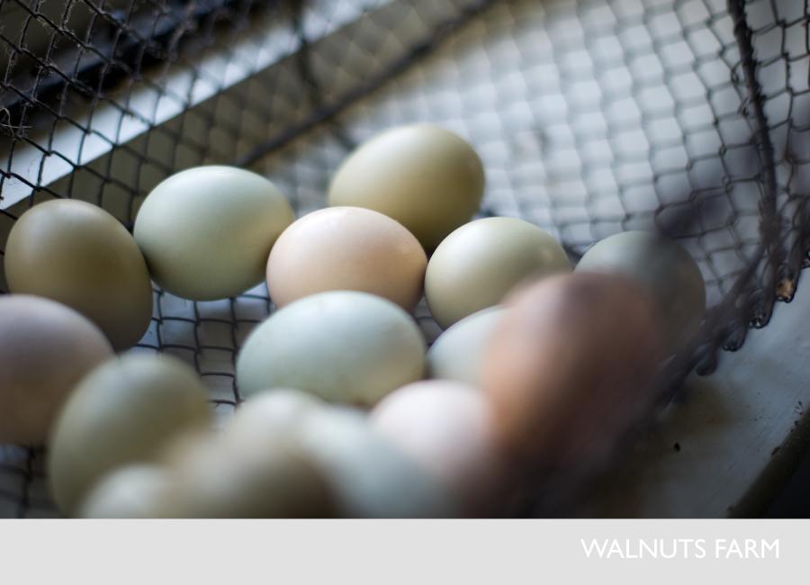 Detail Collective | Lifestyle | Walnuts Farm | Image:Walnuts Farm
