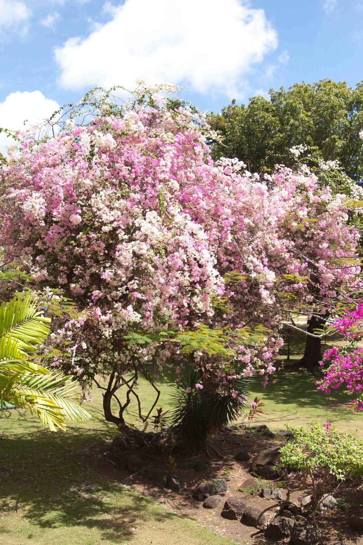 Spring_Break_2015-088.jpg