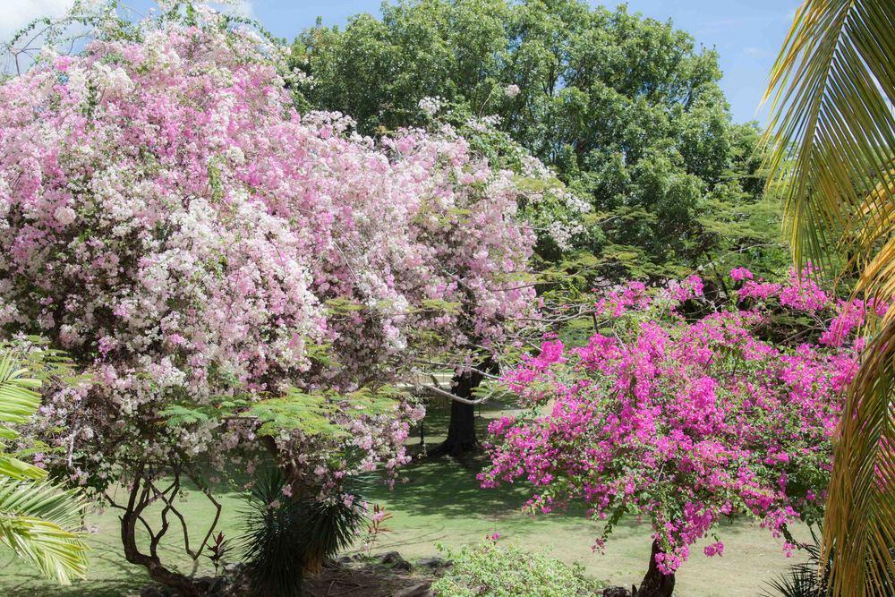 Spring_Break_2015-093.jpg