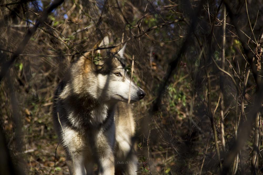 Wolf-17.jpg