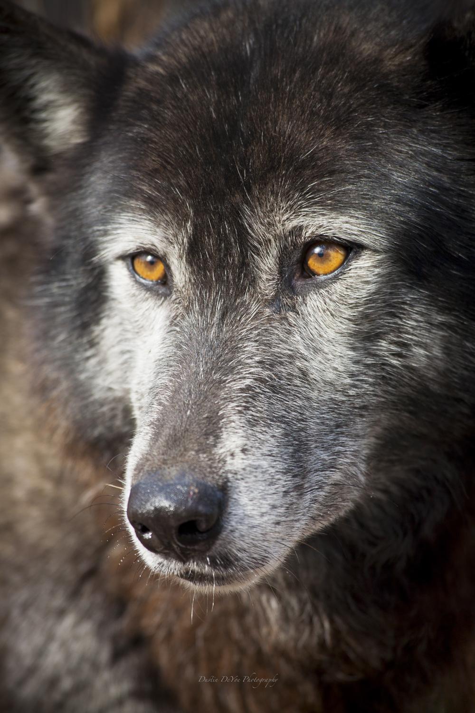 Wolf-32.jpg